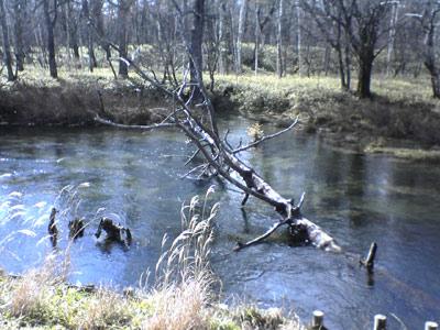 日光国立公園内奥日光(Nikko)の湿原戦場ガ原か小田代原(Odashiro)辺りのもの悲しい河原