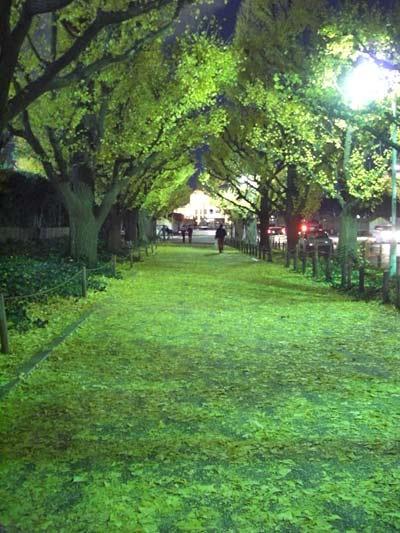 戸張が降りた、夜の神宮外苑銀杏並木(いちょうなみき)通り