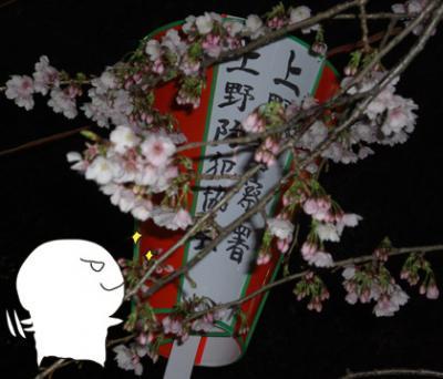 上野恩賜公園入り口の桜(サクラ・さくら)満開