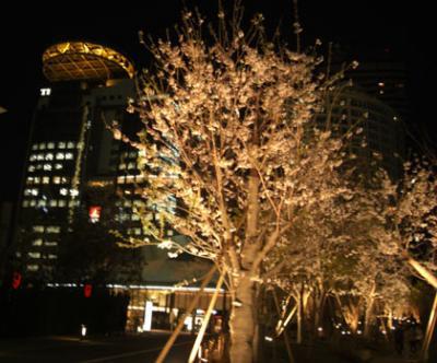 赤坂サカスの桜通り・丸秘