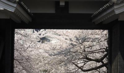 日本武道館の桜・Nipponbudokan・にっぽんぶどうかん