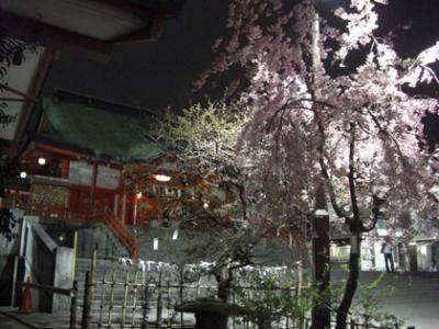 新宿の花園神社境内のさくら