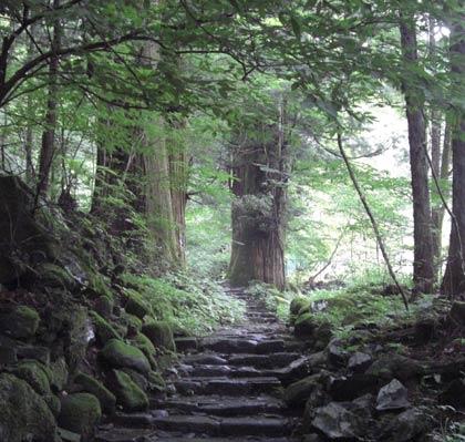 日光・滝尾神社へ続く道での小鳥のさえずり(囀り)動画