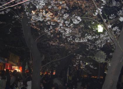 昨夜の靖国神社夜桜見物は物凄い人人人でした。