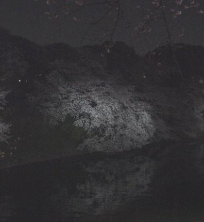 千鳥ケ淵から北の丸公園の水面に映えて浮かび上がる夜桜