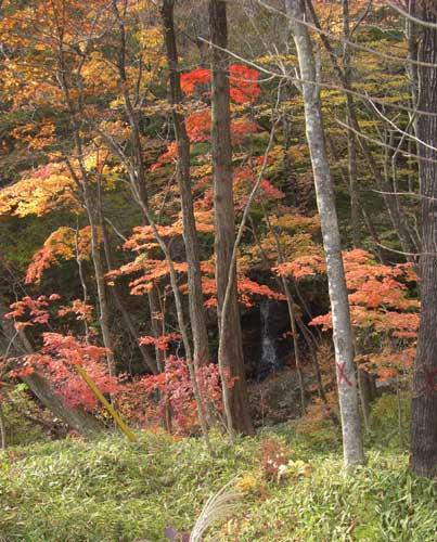 那須塩原市の乙女の滝周辺・紅葉状況写真